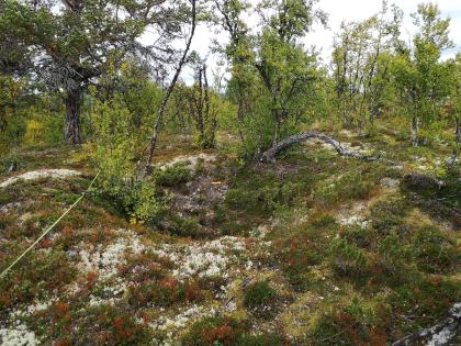 Fangstgrop for elg Megardsmyra